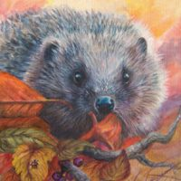 Pamela Budge artist hedgehog