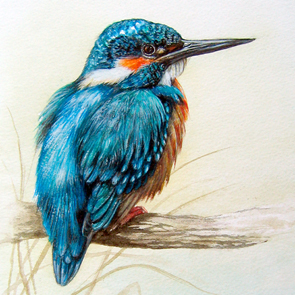 Pamela Budge artist kingfisher
