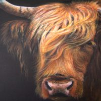Pamela Budge artist Highland cow